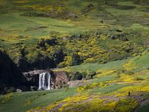 Yellow flowering meadows, romantic waterfall, royalty free stock images