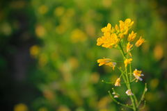 Yellow flowering stock photography