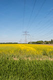 Yellow flowering rapeseed plants in springtime Royalty Free Stock Image