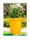Yellow flowerpot  instant photo Royalty Free Stock Photography