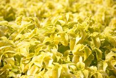 Yellow flowers Stock Image