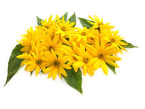 Yellow flowers. And green leaves Royalty Free Stock Image