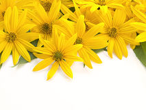 Yellow flowers. On a white background Royalty Free Stock Photos