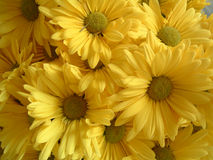Yellow Flowers. A yellow flower bouquet Royalty Free Stock Photo