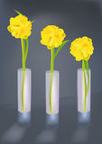 Yellow flowers. In three glass vases Royalty Free Stock Images