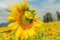 Free Yellow Flowers Stock Image - 133427351