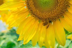Free Yellow Flowers Stock Photography - 133427392