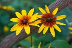 Yellow flowers. In the garden Stock Photo