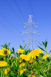 Yellow flowers. In a field on the background high voltage line Royalty Free Stock Photography