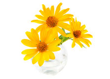Yellow flowers. In a vase on a white background Stock Photography