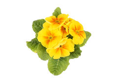 Free Yellow Flowers Stock Photos - 18546383