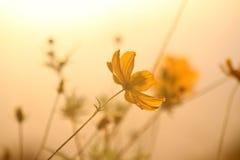 Free Yellow Flowers Royalty Free Stock Photo - 19186215