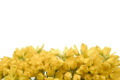 Yellow flowers 2. Yellow flower background space for text Stock Image