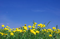 Free Yellow Flowers Royalty Free Stock Photography - 2327357