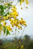 Yellow flowers Royalty Free Stock Photos