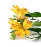 Yellow flowers Stock Photo
