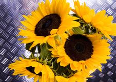 Free Yellow Flowers Royalty Free Stock Image - 2978716