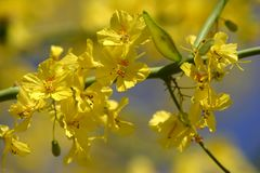 Free Yellow Flowers Royalty Free Stock Images - 4180589