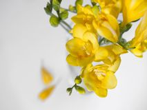 Yellow flowers. At white background Stock Image