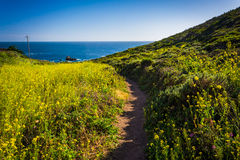 Yellow flowers along a trail at Garrapata State Park  Stock Photo