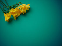 Yellow flowers on artistic dark green paper celebration background Royalty Free Stock Images
