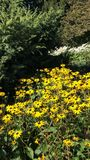 Yellow flowers in autumn royalty free stock photography