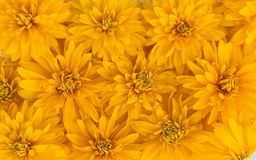 Yellow flowers background. Beautiful bright yellow flowers background royalty free stock photography