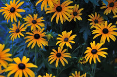 Yellow flowers on the background Royalty Free Stock Photography