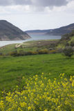 Yellow flowers on background of green valley of mountain river. Royalty Free Stock Image