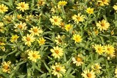 Yellow flowers background stock photo