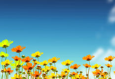Yellow flowers on background sky Stock Photography