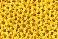 Yellow flowers background. Top view. Copy space Royalty Free Stock Photos