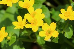 Yellow flowers background Royalty Free Stock Photos