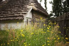 Yellow flowers on the backyard of old peasant cottage. Detail of open-air ethnography museum in Tokarnia, Poland stock image