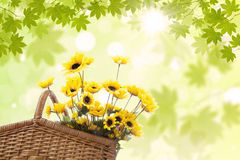 Yellow flowers in basket Royalty Free Stock Photo