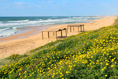 Yellow flowers and the beach on Mediterranean sea. Royalty Free Stock Photography