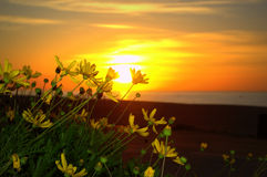Yellow flowers and beach sunrise Royalty Free Stock Photos