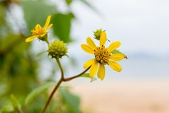 Yellow flowers on the beach. On sunshine day Royalty Free Stock Photography