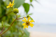 Yellow flowers on the beach. On a beautiful day Royalty Free Stock Photos