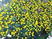 Yellow flowers. Beautiful yellow flowers Stock Photo