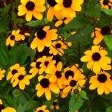 Yellow flowers. Royalty Free Stock Photo