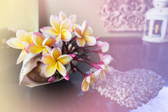 Yellow flowers beautiful Frangipani decorated in sea conch shell Royalty Free Stock Images