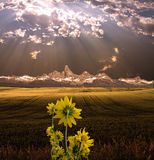 Yellow Flowers before Beautiful Sunset stock image