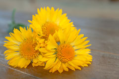 Yellow flowers. Royalty Free Stock Images