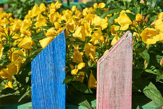Yellow flowers behind a colorful fence. Stock Photos