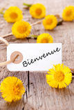 Yellow Flowers with Bienvenue Stock Image