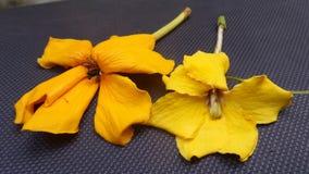 Yellow flowers on black ground Royalty Free Stock Photo