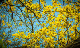 Yellow flowers bloom in spring Stock Images