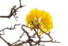 Yellow flowers bloom in spring. Image Stock Photo