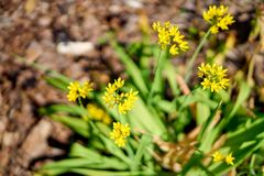 Yellow flowers in blossom, close up stock photos